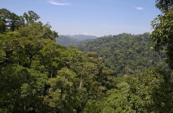 Brunei, Ulu Temburong National Park
