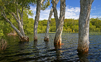 Cooloola Great Walk: Great Sandy National Park - by Katerina